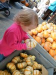 My smallest picking out her Baby Pumpkin