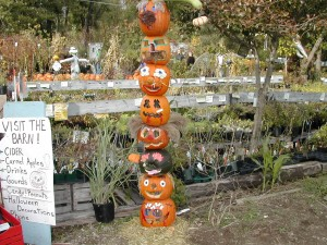 Photo from Minges Pumpkin Festival in Harrison