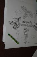 FlightofButterfliesColoringSheet
