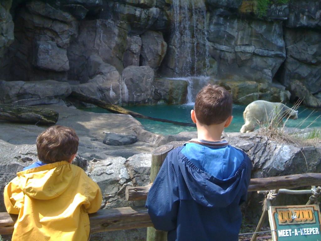 Polar Bears at The Cincinnati Zoo